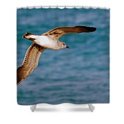Laughing Gull 002 Shower Curtain