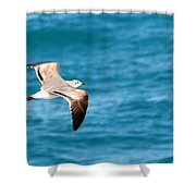 Laughing Gull 003 Shower Curtain