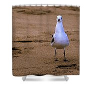 Laughing Gull 004 Shower Curtain