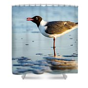Laughing Gull On The Beach At Fort Clinch State Park Florida  Shower Curtain