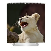 Laughing Lioness Shower Curtain
