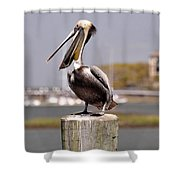 Laughing Pelican Shower Curtain