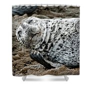 Laughing Seal Shower Curtain