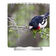 Launch Time Shower Curtain