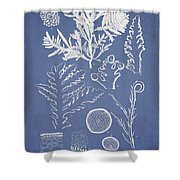 Laurencia Concinna And Hypnea Musciformis Shower Curtain by Aged Pixel