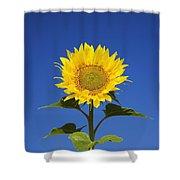 Laval, Quebec, Canada Sunflower Shower Curtain