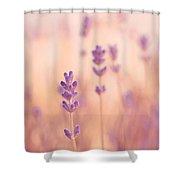 Lavandines 02 - S09a Shower Curtain