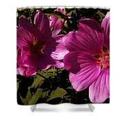 Lavatera - A Study In Pink Shower Curtain