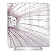 Lavatera Flower Stamen Macro  Shower Curtain