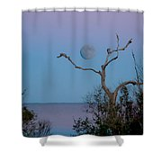 Lavendar Moon Shower Curtain