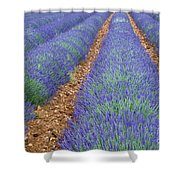 Lavendel 2 Shower Curtain
