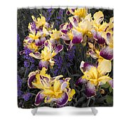 Lavender And Irises Shower Curtain