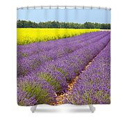 Lavender And Mustard Shower Curtain