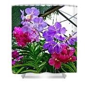 Lavender And Red Orchids At Maerim Orchid Farm In Chiang Mai-tha Shower Curtain