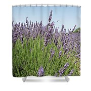 Lavender And The Bee Shower Curtain