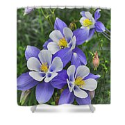Lavender And White Star Flowers Shower Curtain