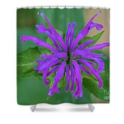 Lavender Bloom Shower Curtain