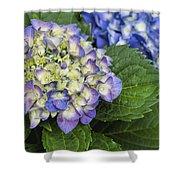 Lavender Blue Hydrangea Blossoms Shower Curtain