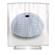 Blue Sea Urchin White Shower Curtain