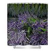Lavender Bundles Shower Curtain