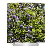 Lavender-colored Blooming Tree Shower Curtain