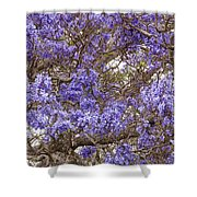 Lavender-colored Tree Blossoms Shower Curtain
