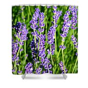 Lavender Dream Shower Curtain