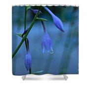 Lavender Evening Shower Curtain