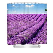 Lavender Field And Tree In Summer Provence France. Shower Curtain by Matteo Colombo