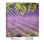 Lavender Field In France Shower Curtain