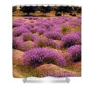 Lavender Fields 2 Shower Curtain