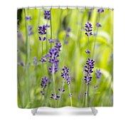 Lavender Flowers Background Shower Curtain