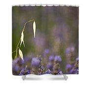 Lavender, France Shower Curtain