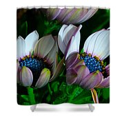 Lavender Frost African Daisy Shower Curtain