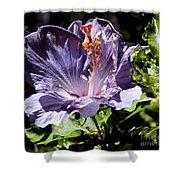 Lavender Hibiscus Shower Curtain
