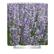 Lavender Hues Shower Curtain