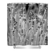 Lavender In Black And White Shower Curtain