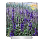 Lavender In The City Park Shower Curtain