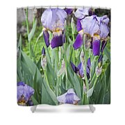 Lavender Iris Group Shower Curtain
