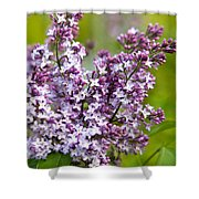 Lavender Lilacs Shower Curtain