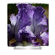 Lavender Lust Shower Curtain