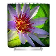 Lavender Passion Shower Curtain by Karen Wiles