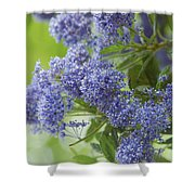 Lavender Pompoms Shower Curtain