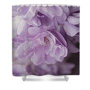 Lavender Purple Roses Rhapsody Shower Curtain