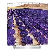 Lavender Study - Marignac-en-diois Shower Curtain