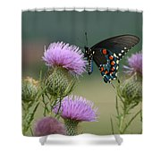 Lavender Thistle And Pipevine Swallowtail Butterfly Shower Curtain