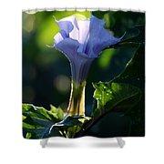 Lavender Trumpet Flower Shower Curtain