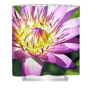 Lavillita Flower 10117 Shower Curtain