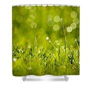 Lawn Twinklers Shower Curtain
