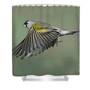 Lawrences Goldfinch Shower Curtain